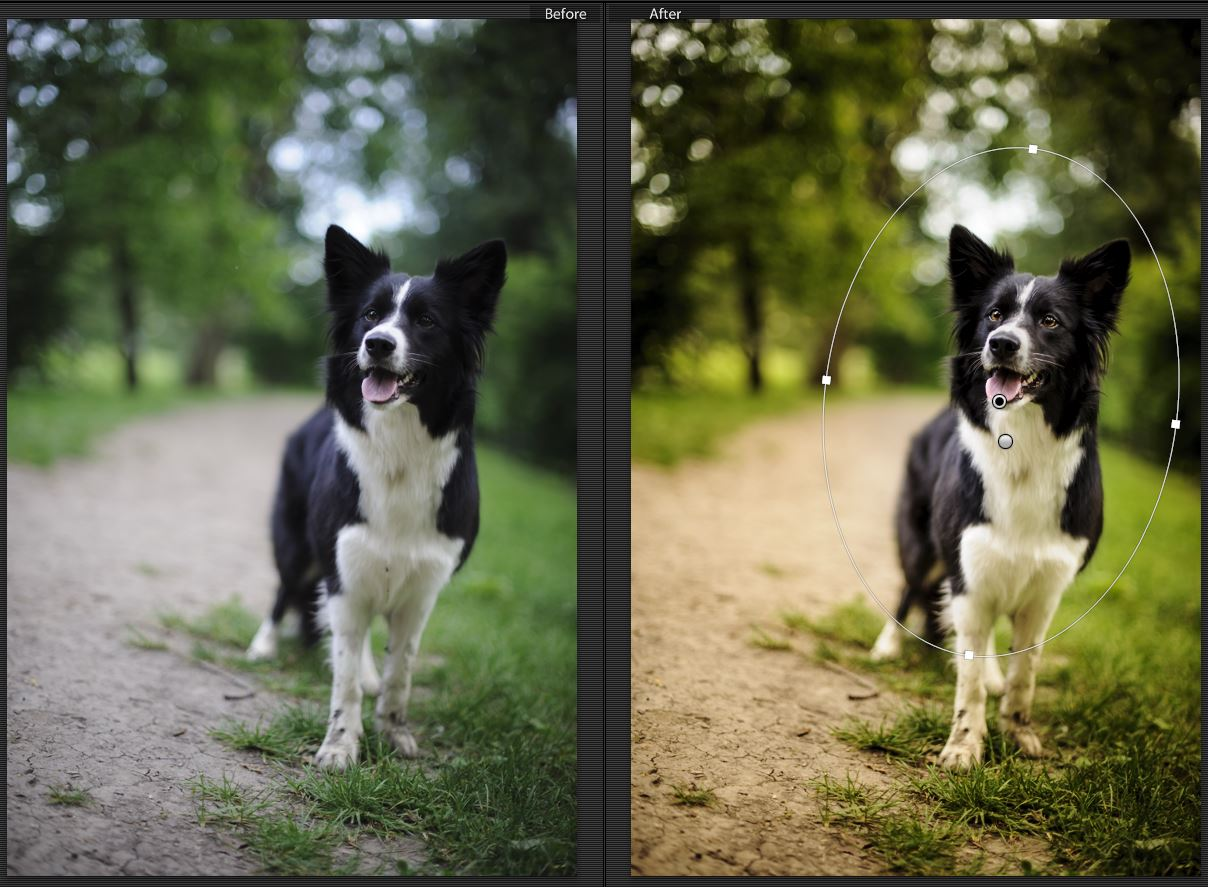 Lightroom 5 - Radial filter