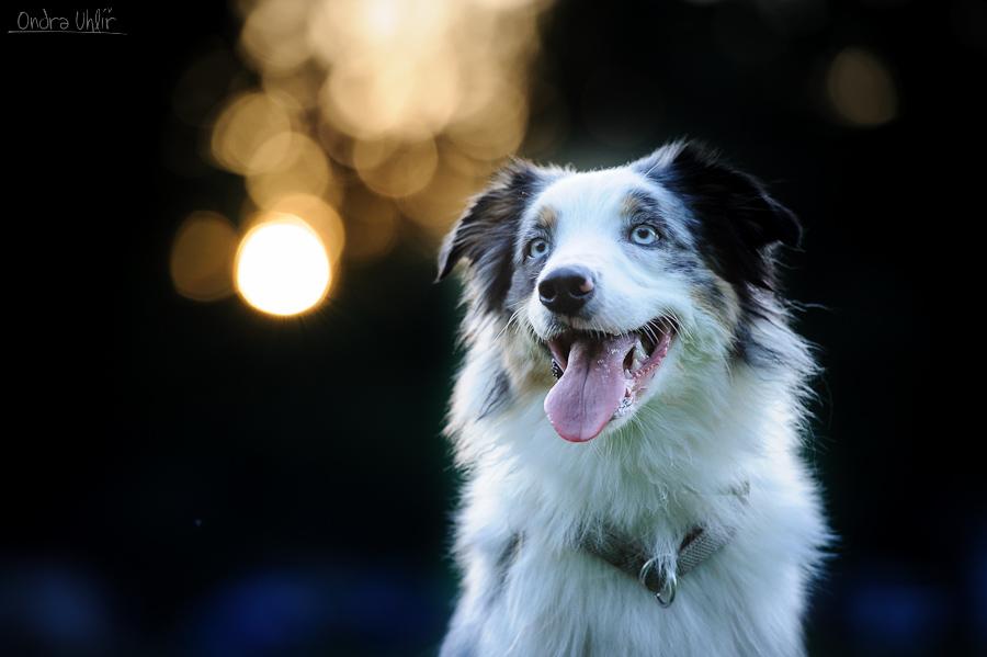 Dogfrisbee dovolená