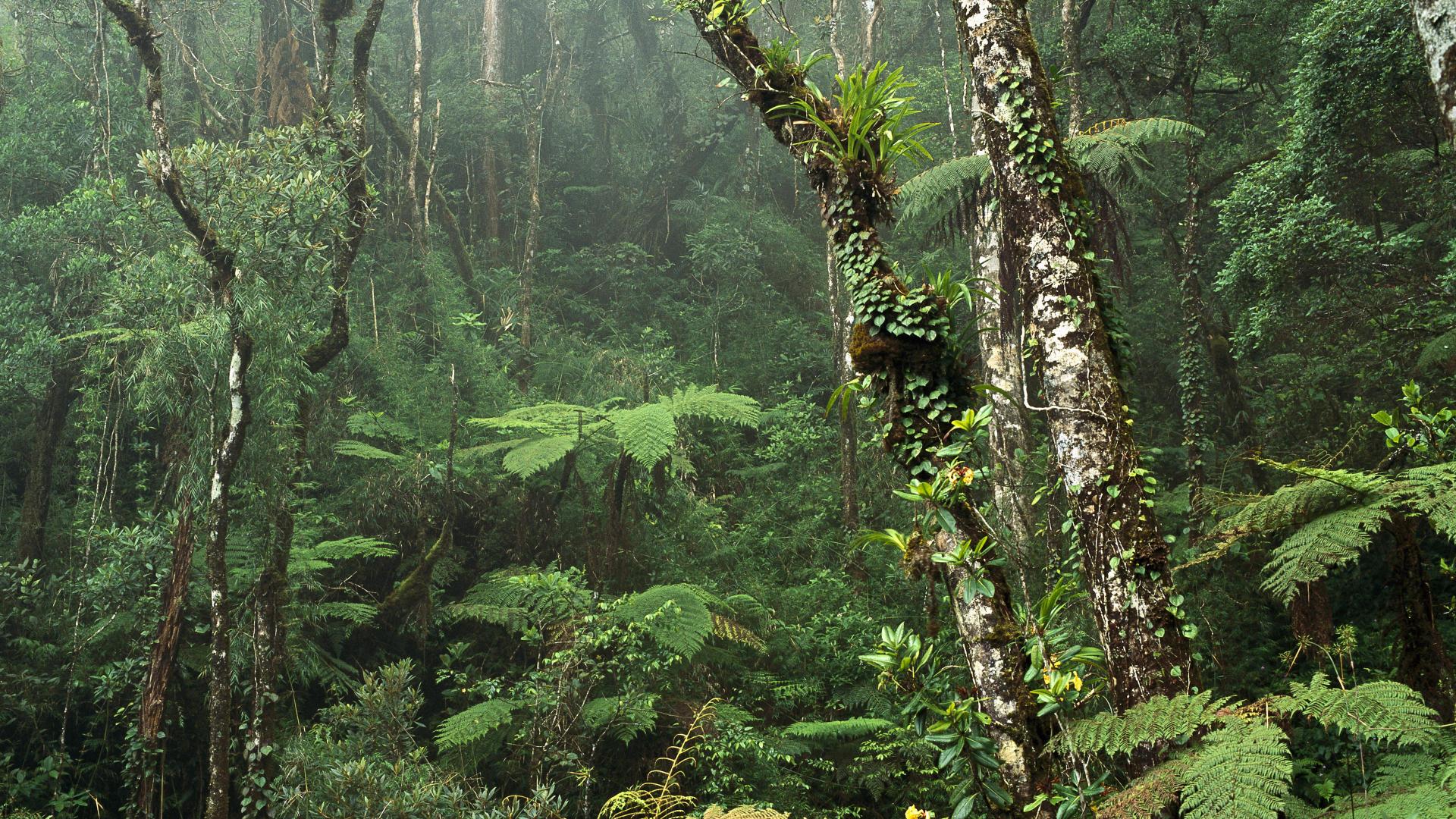 Borneo – velký sen