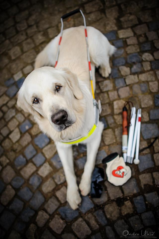 Škola pro výcvik vodicích psů a občanské sdružení VODICÍ PES