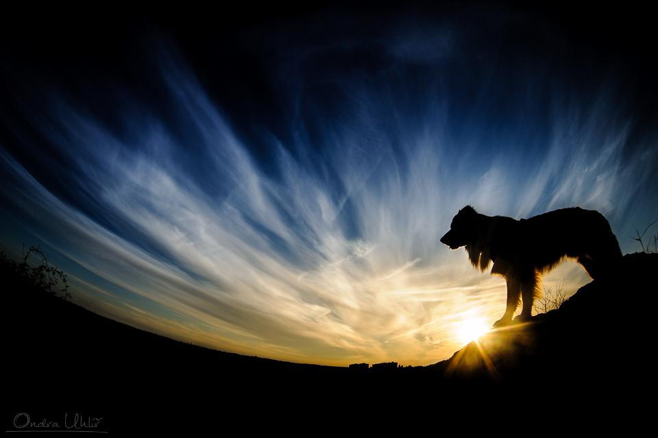 Kurzy focení psů