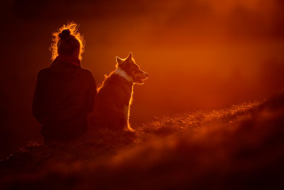 Kurzy fotografování psů pro pokročilé