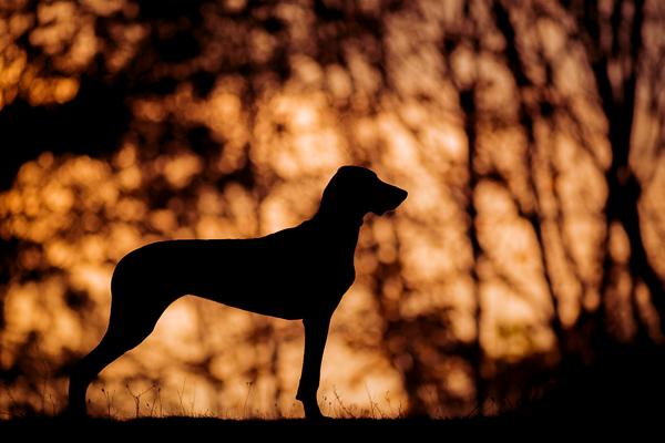 Víkendový kurz focení psů v Košicích