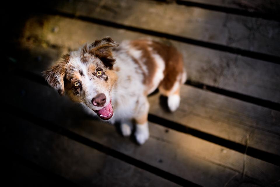 Kurzy fotografování psů