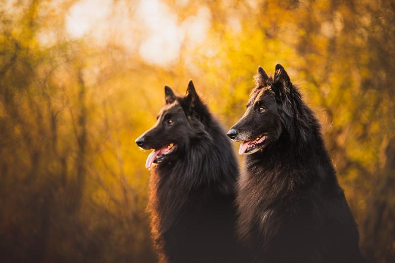 Fotografování psů - Ondra Uhlíř
